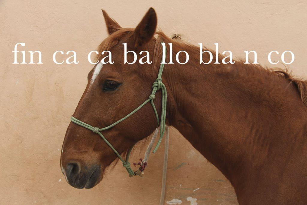 Finca hotel rural Mallorca con equitación - Finca Caballo Blanco