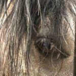 reiten mallorca pferde urlaub montar a caballo equitacion horse riding