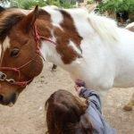 ponyhof reiterferien pferdeferien pferdefinca horsebackriding pferdehof ranch fincaurlaub ferien auf dem pferdehof in mallorca reiturlaub finca pferd reiten erlebnisse caballo blanco son bages pferdehof pferderanch pool reiten horses reitferien