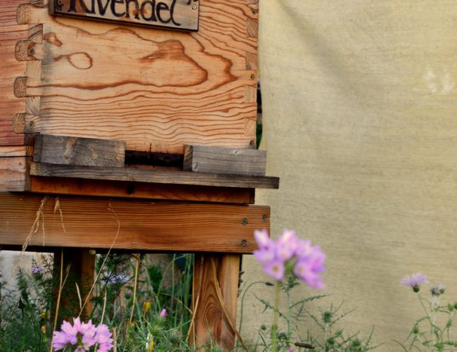 Resultado de imagen de apicultura mallorca