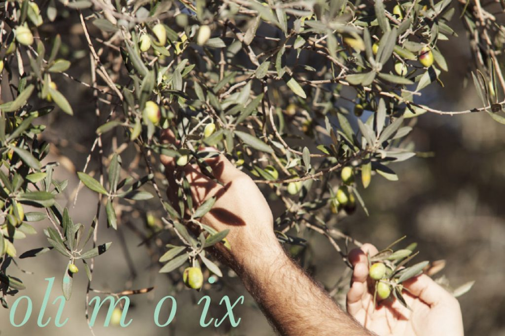 Olive Oil and Deli Food - Moix