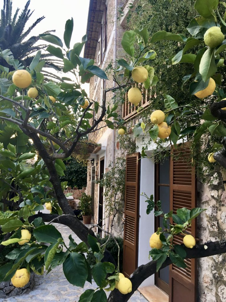 sacova fornalutx lemon seasonal fruit serra simplicity minimalism traditional stylish outdoor retreat findpeace outside barefoot terrace poolside peace view tramuntana alternative stylish lifestyle sustainable hotel ecolodge meditate vegan cuisine natural soft beautiful destinations workshops tranquil casa pool reconnect peaceful palmtrees yogaflow indulge calm quiet wellness cosy finca landhotel deluxe luxury pool calmness genuine hotel finca conscious eco retreat small yoga conscioustraveler naturelover wellbeing garden nature authentic local design calm mediterranean relax healthy islandlife local mallorquin mallorca natural traditional tradition countrylife respectful quality inland homeaway harvest garden