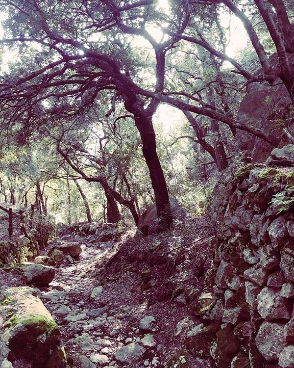 Trockensteinmauer Sierra de Tramuntana Mallorca