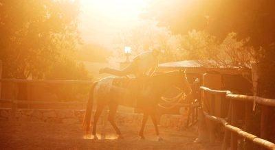 pferdegestütztes Coaching Mallorca