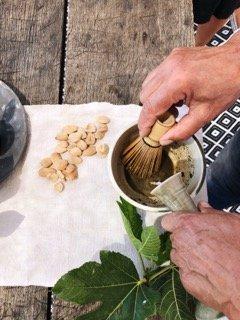 saludable sano healthy harvest olivenernte organic olive leaf tea mallorca infusion hojas olivo olivenblatt tee bio eco latte dosalquemistas
