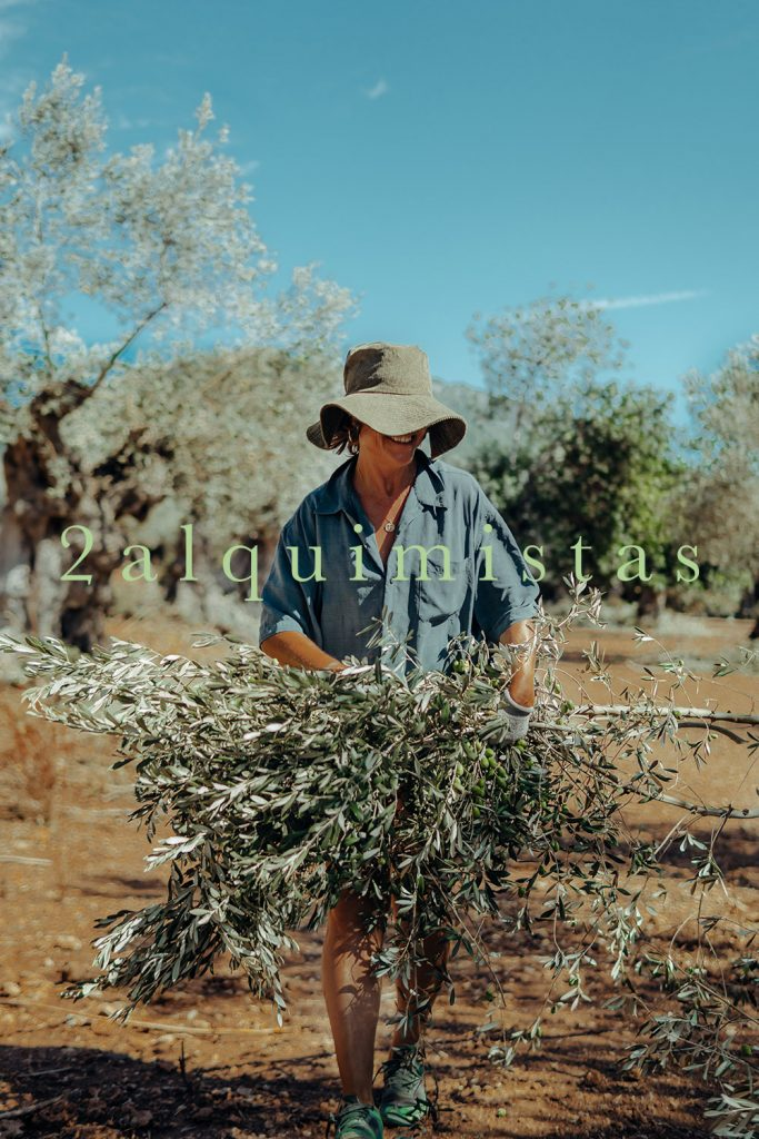 Infusiones saludables de hojas del olivo mallorquín - 2alquemistas