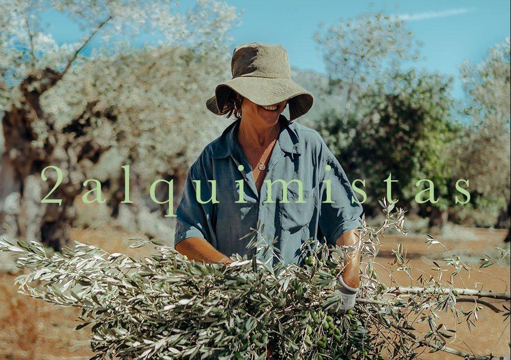 harvest olivenernte organic olive leaf tea mallorca infusion hojas olivo olivenblatt tee bio eco latte dosalquemistas