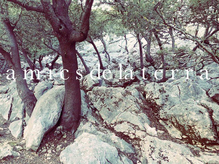 Amics de la Terra – ecologist organisation protect nature on Mallorca