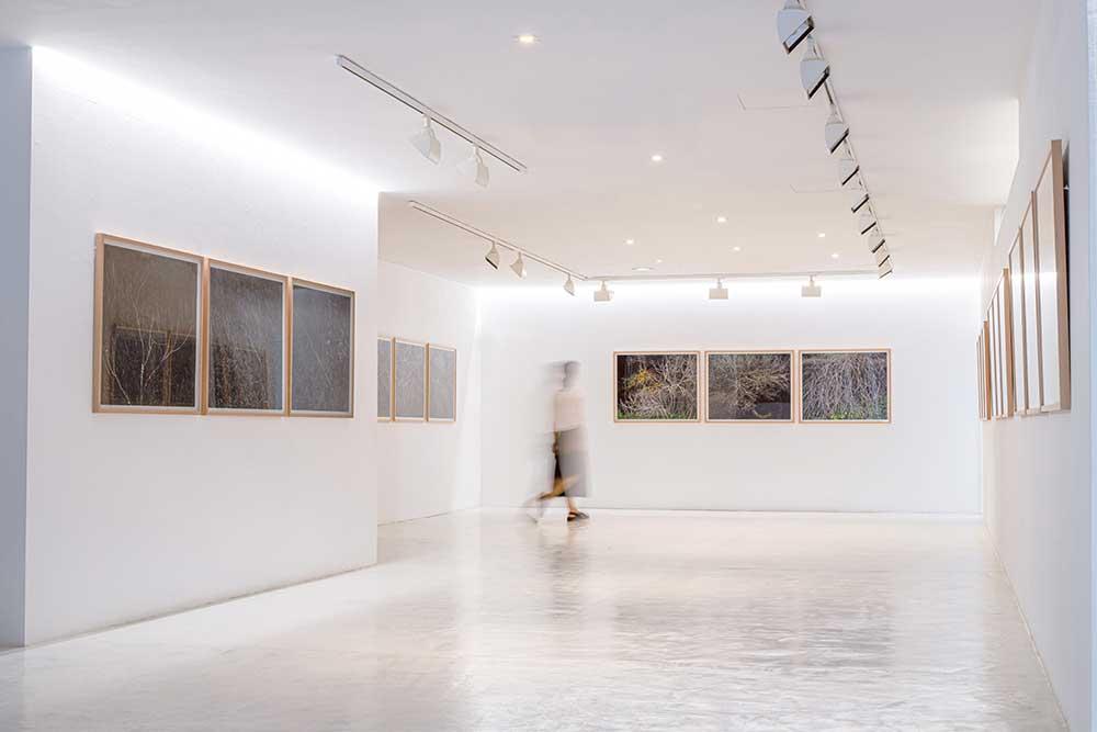 aba.art.gallery.galeria.palma.mallorca.arte.ausstellung.kunst.kultur.galerie-Vegetal-Graffitis-Jean-Marie-del-Moral
