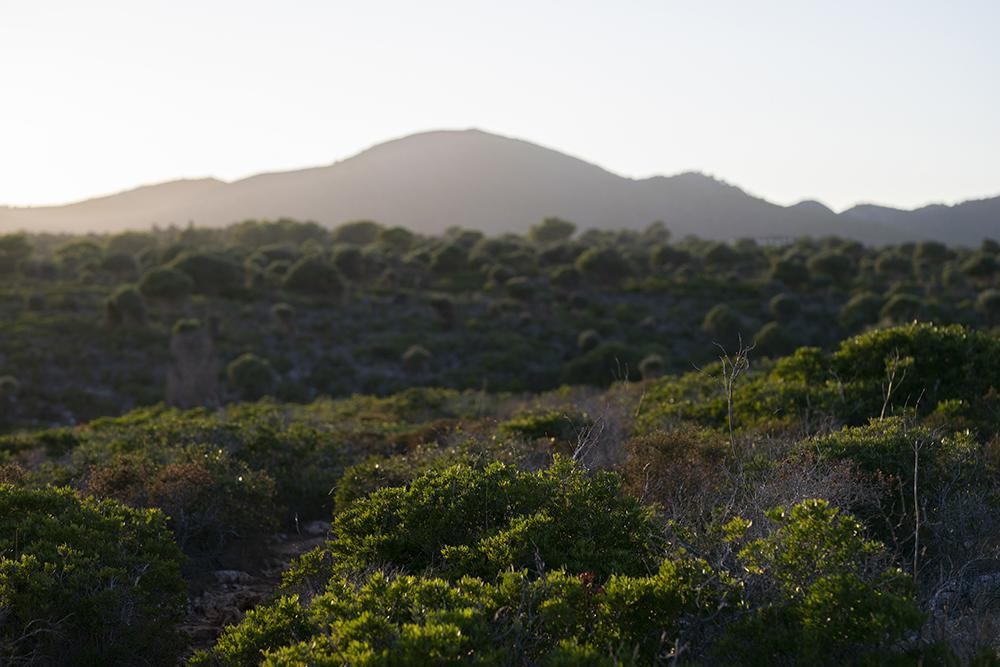 viti.vinci.cosmetica.natural.mallorca.aromas.esencias.ecologicas.landscape