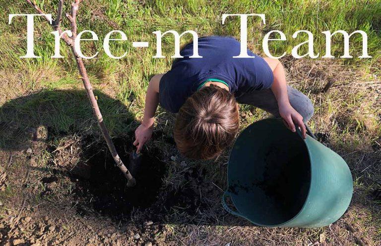 tree-m team plantando arboles
