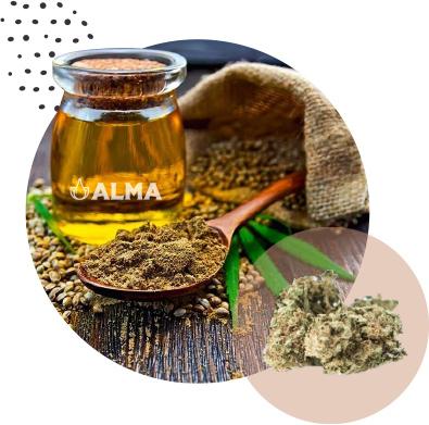 ALMA.aceite.CBD.beneficios.oliva.Mallorca.nature.medecine.remedy.oliveoil