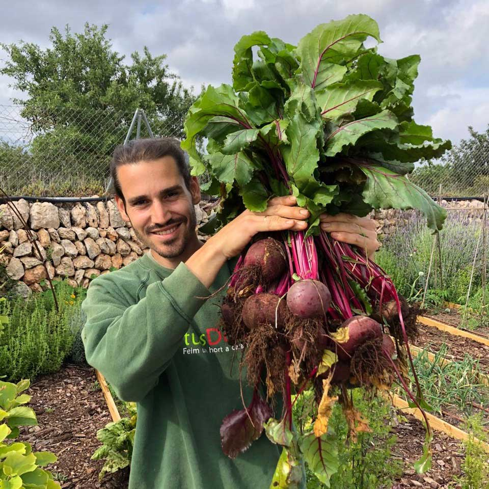 hortus.domi.box.mallorca.plant.delivery.eco.grow.your.own.seeds.sustainable.organic.gardening.planteles.calabaza.ecologico.beetroot.remolacha