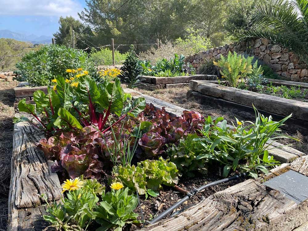 hortus.domi.box.mallorca.plant.delivery.eco.grow.your.own.seeds.sustainable.organic.gardening.planteles.calabaza.ecologico.veggie.garden