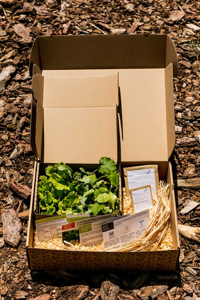 hortus.domi.box.mallorca.plant.delivery.eco.grow.your.own.seeds.sustainable.organic.gardening.planteles