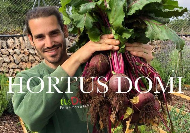 Hortus Domi Box – grow your own veggie garden at home with this plant and seed delivery box